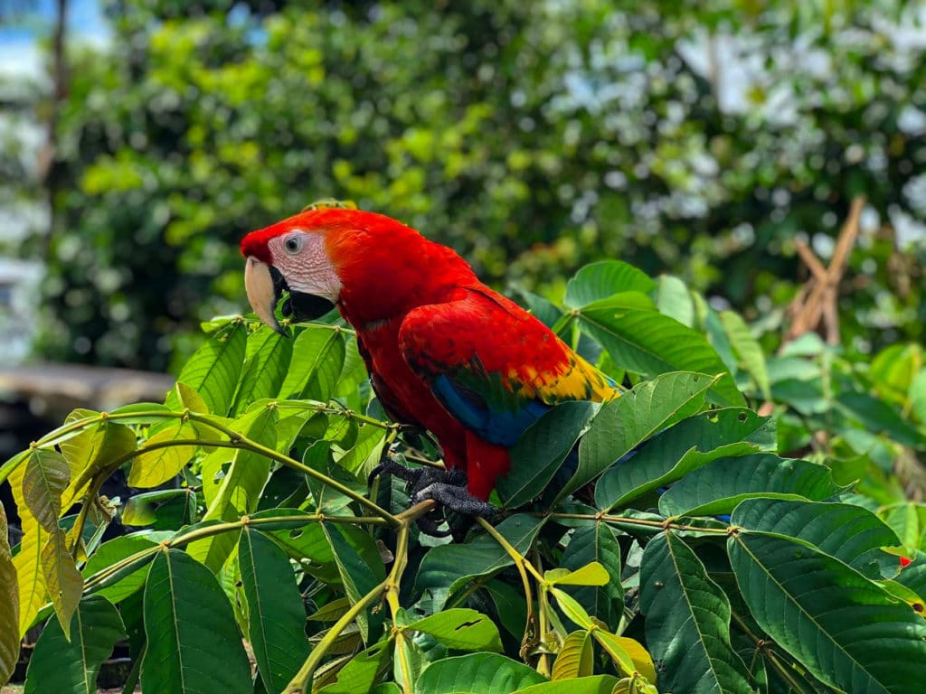 Parrot in Cuyabeno Reserve, Ecuador