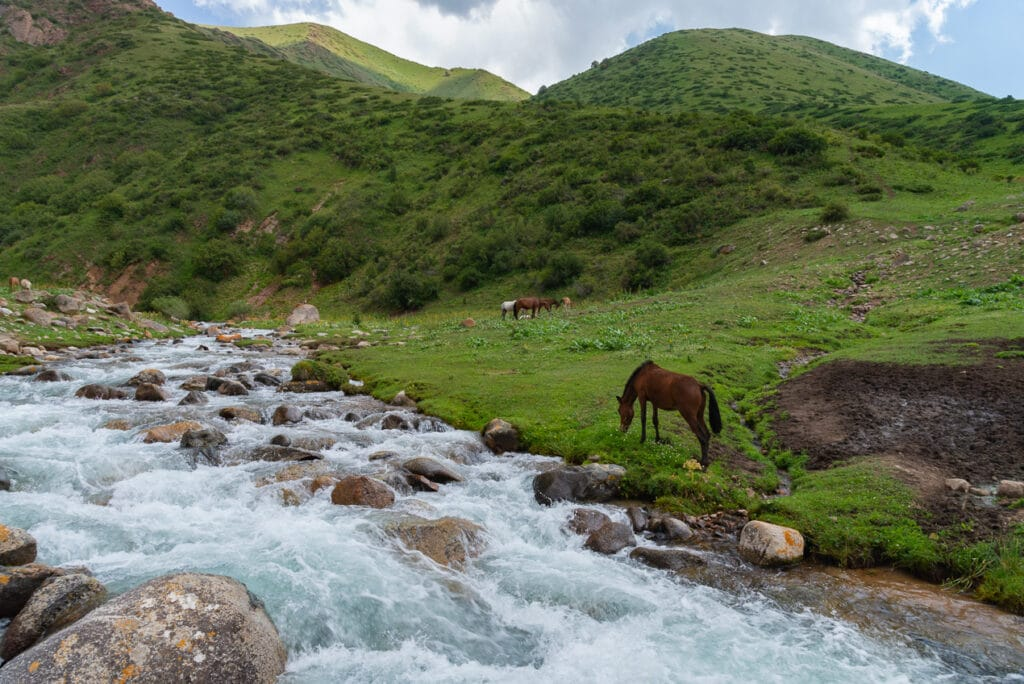Horses grazing on the hike to Song Kol Kyrgyzstan