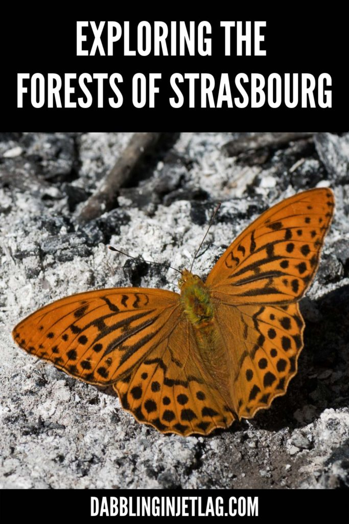 Forests-of-Strasbourg-Pinterest-A