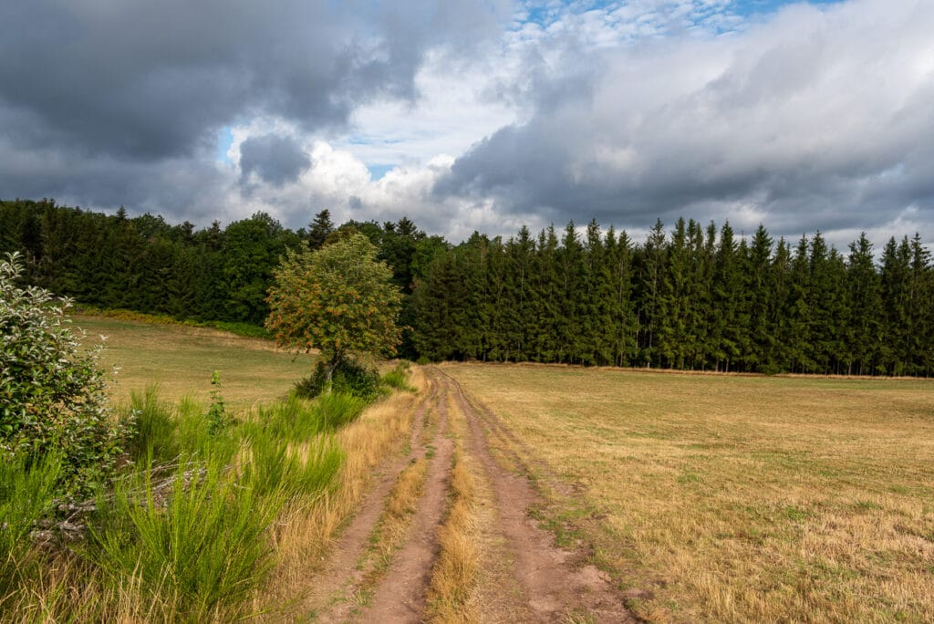 Stunning Landscapes on the Hike to Mont Sainte Odile in Alsace France