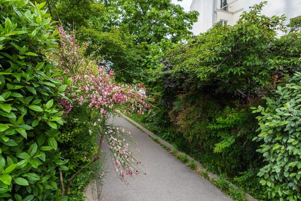 Lush Green Garden with Bright Pink Flowers along the La Coulee Verte