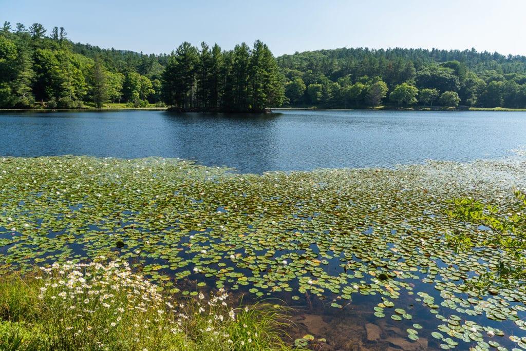 Bass Lake at the Moses H Cone Memorial Park