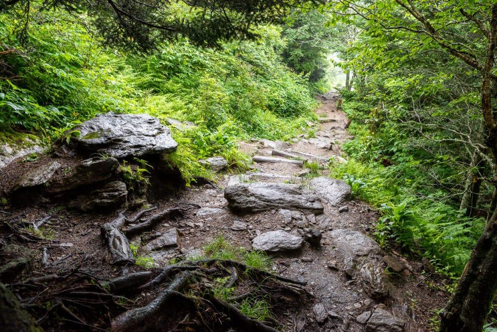 The Rocky Trail to Waterrock Knob